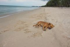 Dog Sleeping on the beach. relaxing and resting Stock Photos