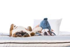 Dog sleeping in bed Stock Photos