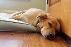 Dog sleeping on bed stock photo