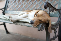Dog sleeping on the bench Stock Photos