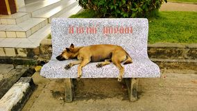 Dog sleeping on a bench Royalty Free Stock Photos