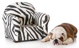 Free Dog Sleeping Beside Chair Stock Photo - 40906090