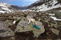 Dog sleeping on big stone with hiking equipment Stock Image