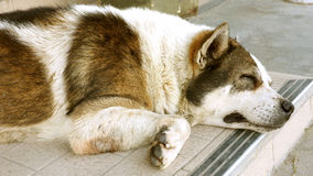 Dog sleeping body part Stock Photos