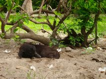 Dog sleeping on cold sand under the tree Stock Images