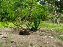 Dog sleeping on cold sand under the tree Stock Photos