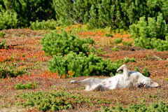 Dog sleeping in colorful vegetation Stock Photos