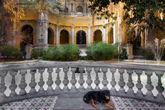 Dog sleeping in a courtyard of a park on Santa Lucia Hill, Santi Royalty Free Stock Photography
