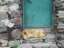 The dog is sleeping on the doorstep of a house in Georgia. Again royalty free stock photography
