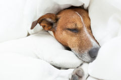 Dog sleeping Stock Photos