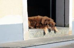 Dog sleeping. In an entrance Stock Photo