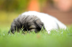 Dog sleeping. On the field stock image