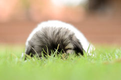 Dog sleeping on the field. Dog lying on the lawn green royalty free stock images