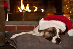 Dog Sleeping by Fireplace Royalty Free Stock Images