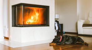 Dog sleeping by the fireplace Stock Image