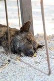 Dog sleeping on floor. Bown dog sleeping on gravel floor Stock Images