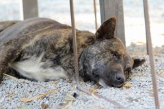 Dog sleeping on floor Royalty Free Stock Photos