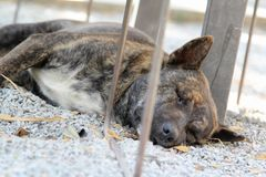 Dog sleeping on floor Royalty Free Stock Images
