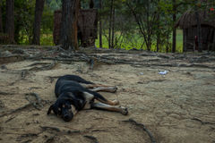 Dog are sleeping in the forest Stock Image