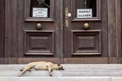 Dog sleeping in front of a closed administration in Istanbul, Turkey Stock Photo