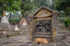 Dog sleeping in front of an hindu bas-relief royalty free stock photos