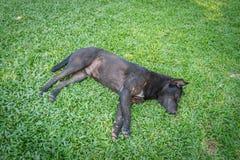 Dog sleeping Stock Images