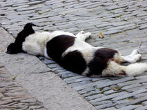 A dog sleeping on the ground Royalty Free Stock Images