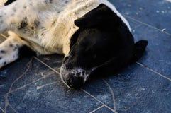 Dog Sleeping On Ground Stock Photo