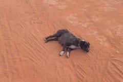 Dog sleeping on ground Stock Photos