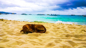 Dog sleeping happily on the beach against the backdrop of the turquoise sea and storm clouds Stock Images