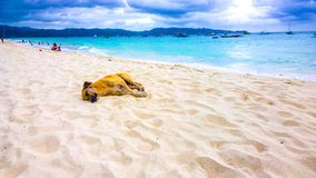 Dog sleeping happily on the beach against the backdrop of the turquoise sea and storm clouds Stock Photo