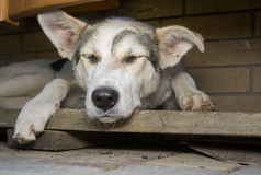 Dog sleeping in its secluded corner Stock Photography