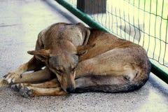 A dog sleeping a kiosk stock photo