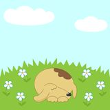 Dog sleeping on the meadow Stock Photo