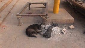 Dog sleeping near fire ash in Varanasi, India Stock Images