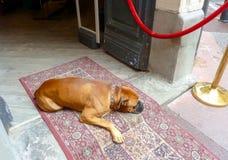 Dog sleeping near opened door to hotel royalty free stock photos