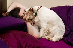 Dog with sleeping owner. Spaniel dog trying to wake sleeping owner royalty free stock photography