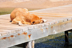 Dog sleeping on pier Royalty Free Stock Photography