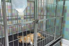 Dog sleeping for recovery in the cage Stock Images