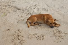 Dog Sleeping relaxing on the beach Stock Photos