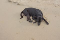 Dog Sleeping relaxing on the beach Royalty Free Stock Photography