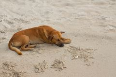 Dog Sleeping relaxing on the beach Stock Photography