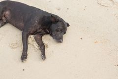 Dog Sleeping relaxing on the beach Royalty Free Stock Image