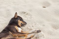 Dog Sleeping relaxing on the beach Royalty Free Stock Images