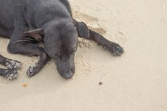 Dog Sleeping relaxing on the beach Stock Images