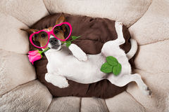 Dog sleeping or resting Stock Images