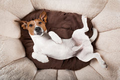 Dog sleeping or resting Stock Photo