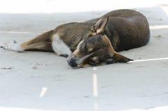 Dog sleeping on sand beach Stock Images
