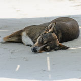 Dog sleeping on sand beach Stock Photography