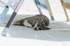 Dog sleeping on sand beach Royalty Free Stock Images